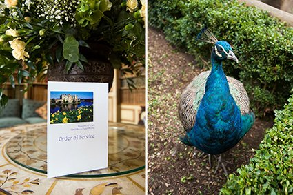 Leeds Castle spring wedding with daffodils and one of the resident peacocks ready to greet the bride and groom before their Leeds Castle wedding ceremony