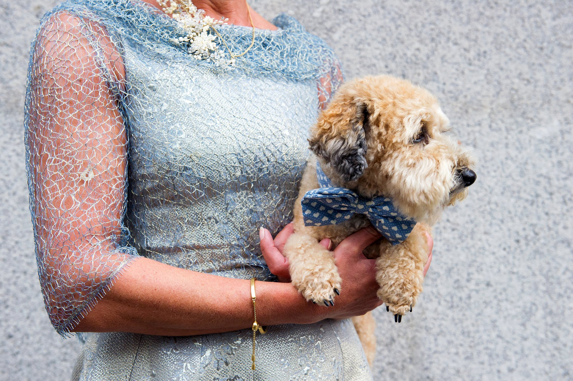 dog wedding photographer london wearing a pale blue and white heart bow tie matching his owner, the bride, in her pale blue and gold metallic wedding dress