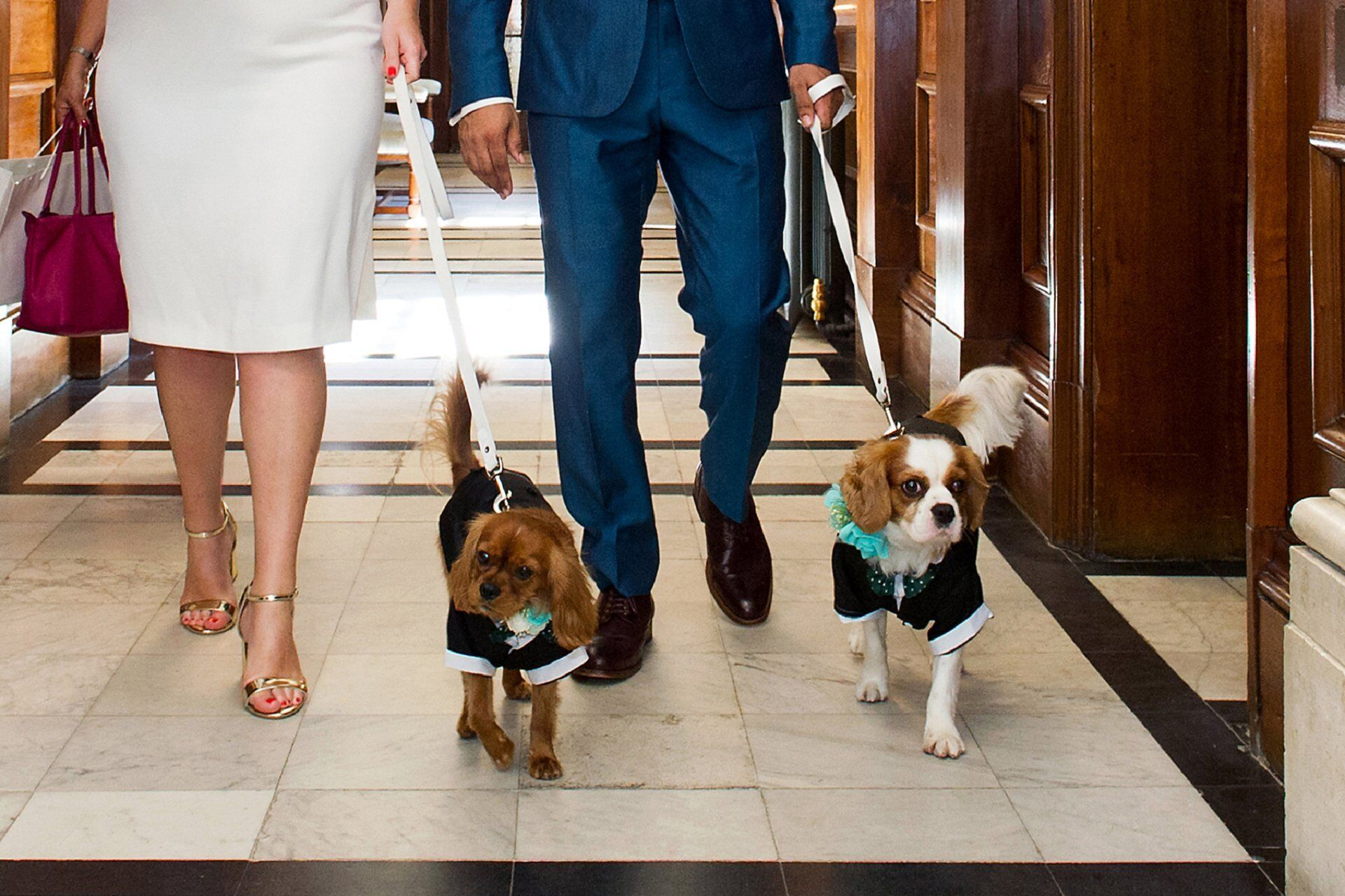 bride and groom with their two dogs on the first floor corridor at old marylebone town hall after their marylebone room wedding ceremony