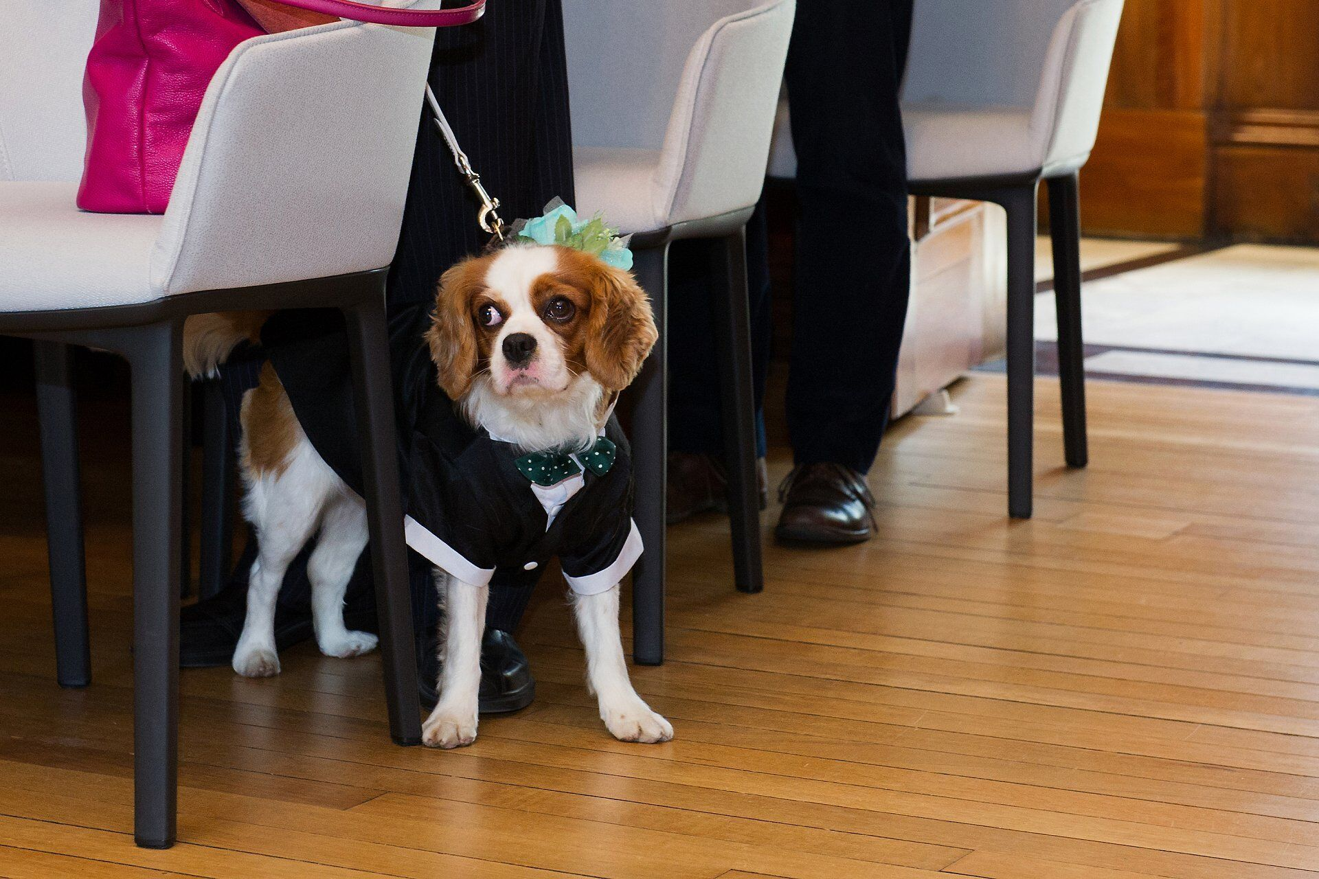 dog wearing floral collar black and spotty racing green bow tie to match groom at westminster register office
