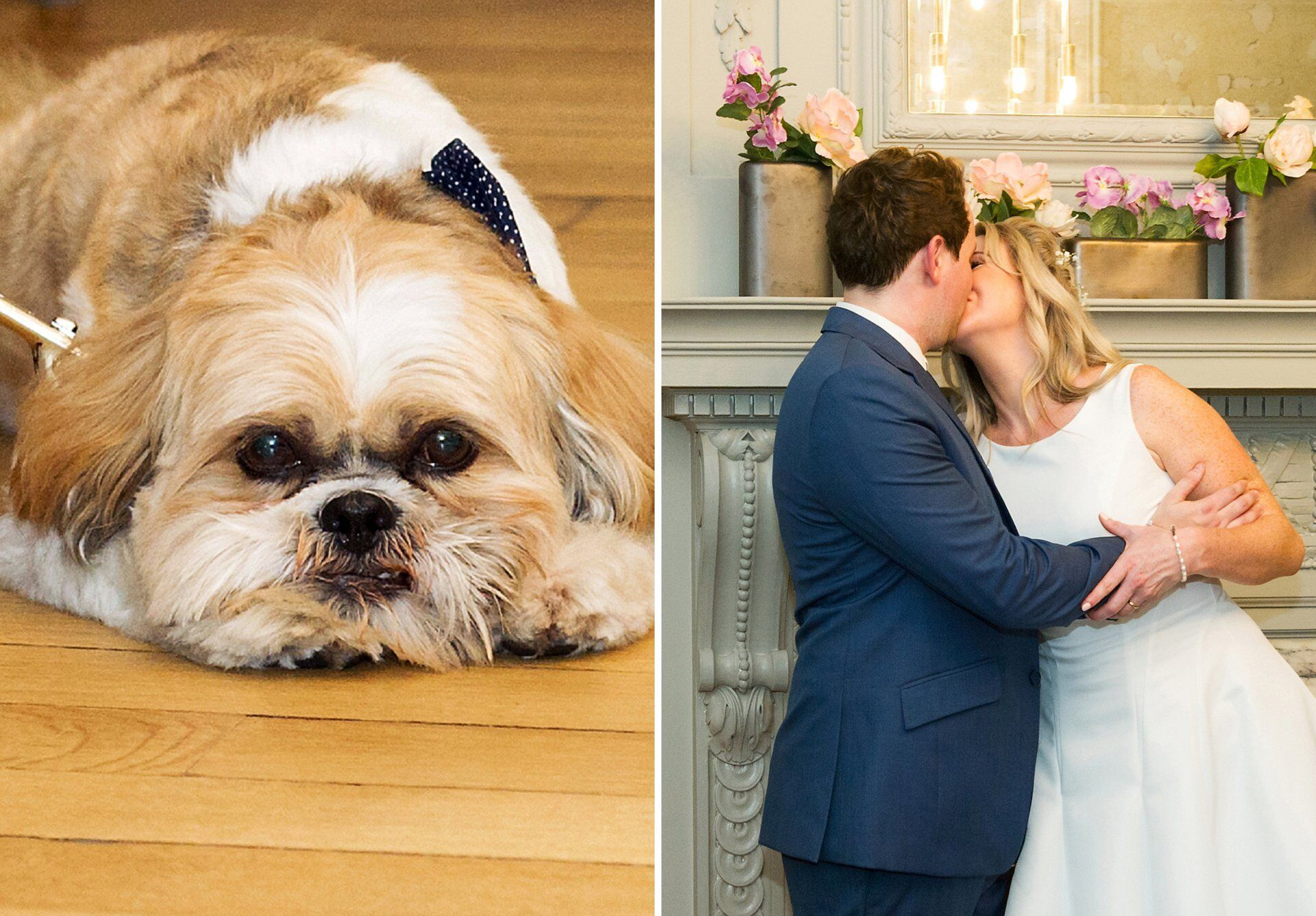 shih tzu dog watches owners kiss after their old marylebone town hall wedding